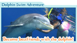 Dolphin Swim Adventure Only $99 usd
