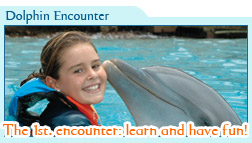 Dolphin Encounter Only $69 usd