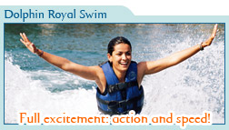 Dolphin Royal Swim Only $99 usd
